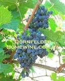 Саженцы винограда Дорнфелдер